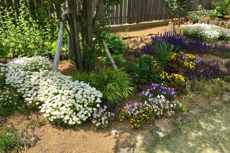 サングラムの庭の花