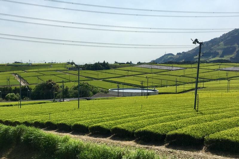 牧之原の広大な茶畑 その3